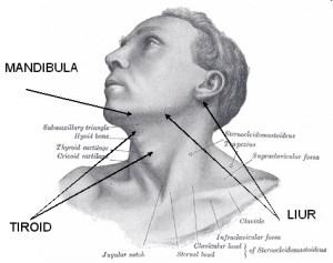 obat leher bengkak tradisional